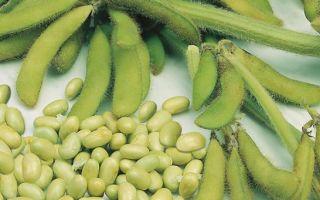 Что представляет собой соя: состав, польза и вред для организма человека