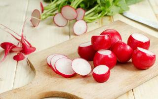 Польза и вред редиски для здоровья организма