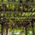 Деревянная конструкция навеса для винограда