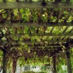 Навес для винограда – разновидности и особенности строительства