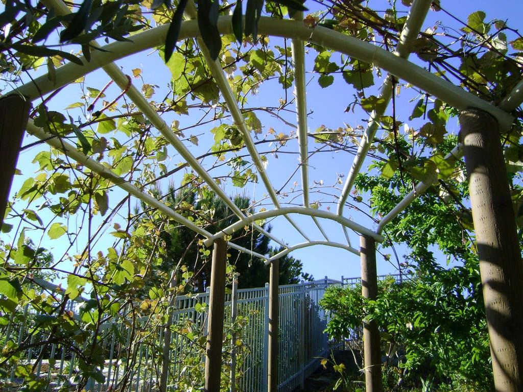 Навес для винограда в виде арки