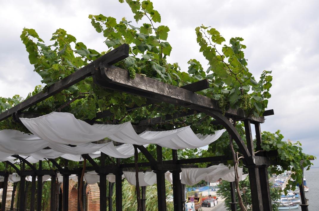 Простая конструкция навеса из дерева для винограда