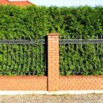 Изгородь из можжевельника: красивое ограждение участка
