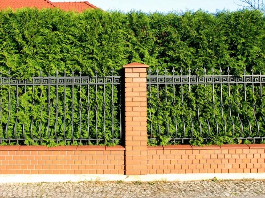 Двойной комбинированный забор для дачи с использованием живой изгороди можжевельника