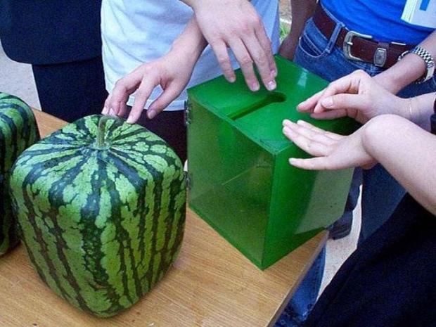 Как получить квадратный арбуз в домашних условиях