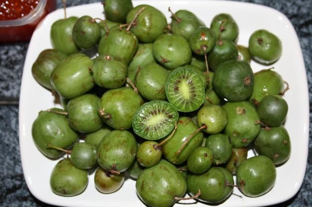 Плоды дальневосточного киви выращенные на даче