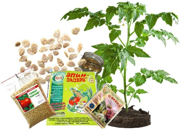 Правила подготовки семян помидор к посадке на рассаду - полезные советы