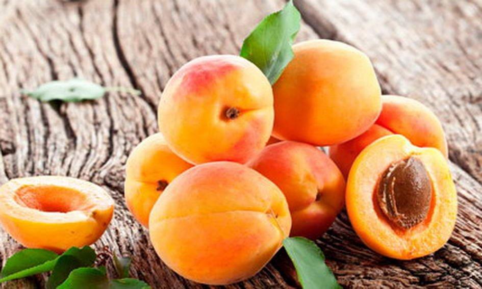 Размножение абрикоса косточкой в домашних условиях