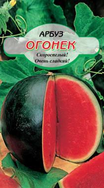 Семена для посадки арбуза сорта огонек