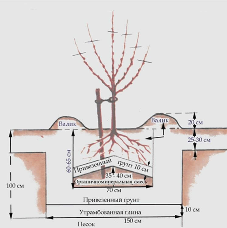 Схема посадочной ямы для абрикосового дерева в песчаном грунте