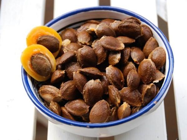 Способы размножения абрикоса косточкой