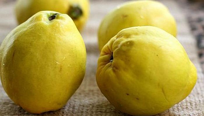 Айва когда созревает - сбор и хранение плодов