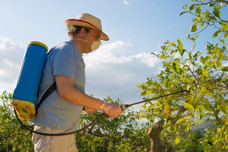 Чем подкормить абрикос осенью - опрыскивание как внекорневое удобрение