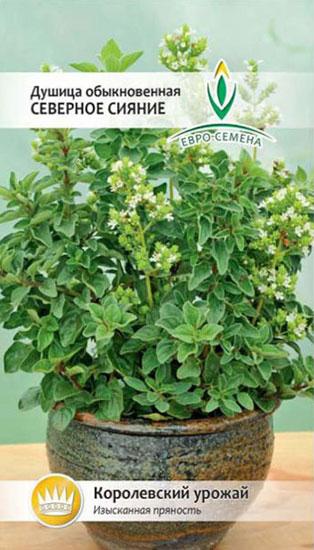 Душица обыкновенная сорт Северное Сияние для выращивания на даче из семян