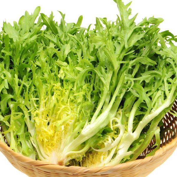 Эндивий выращивание из семян полезные свойства салата