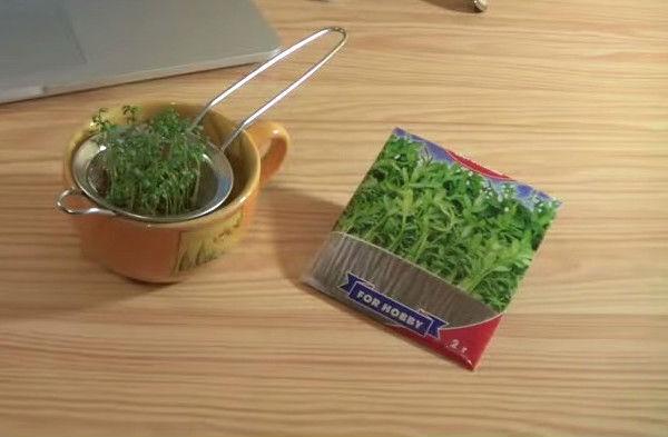 Как правильно подготовить семена кресс-салата к посадке на подоконнике