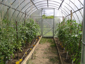 Как правильно посадить помидоры в теплице из поликарбоната