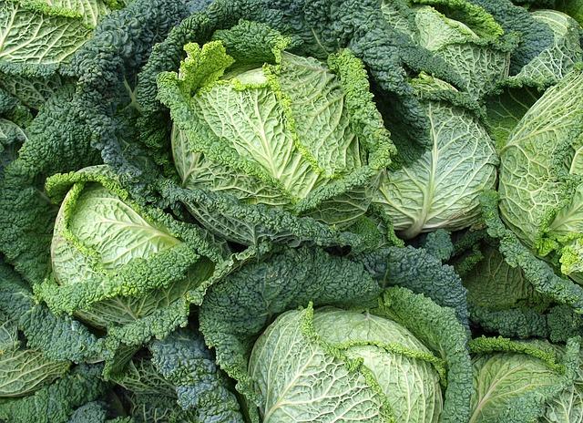 Как правильно вырастить савойскую капусту своими руками