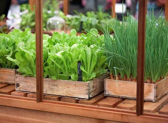 Как вырастить шпинат на подоконнике - полезный листовой овощ