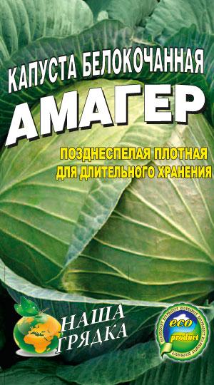 Капуста белокочанная сорт Амагер - рейтинг лежких сортов