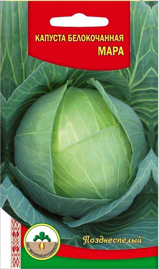 Мара - позднеспелый сорт белокочанной капусты