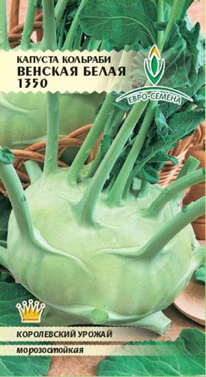 Морозоустойчивая капуста кольраби сорта Венская белая
