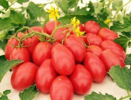 Помидоры Ракета преимущества посадки томатов на даче