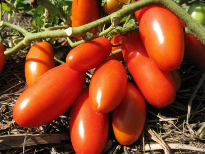 Помидоры Ракета требования к уходу за овощем