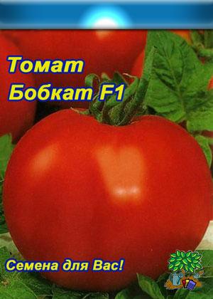 Помидоры бобкат - детерминантный сорт томатов