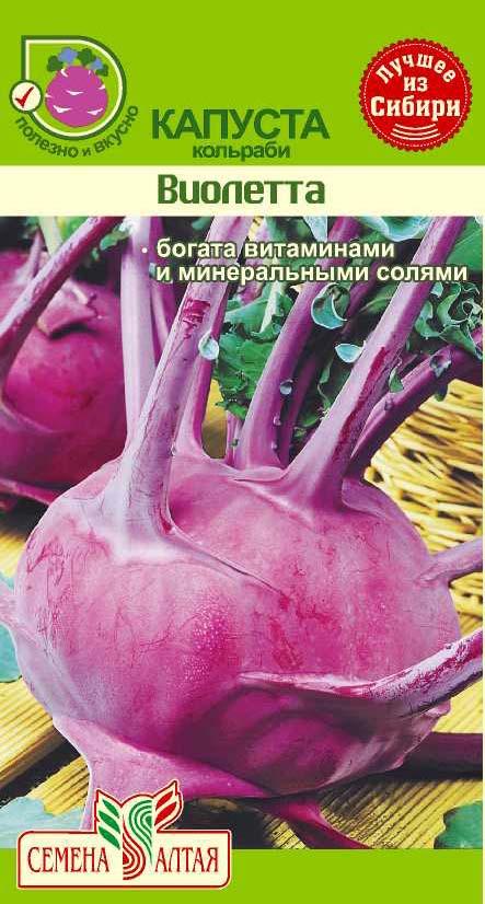 Позднеспелая витаминная капуста кольраби сорта Виолетта
