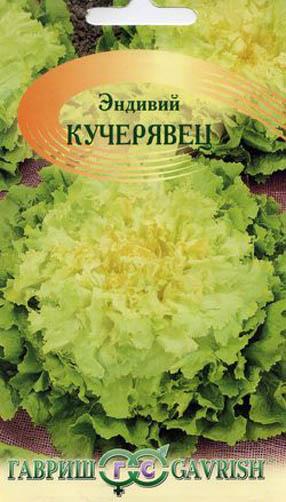 Семена эндивия салатного сорта Кучерявец для посадки на даче