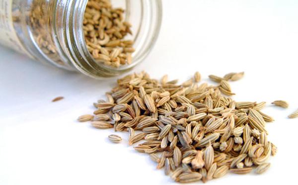 Семена фенхеля для выращивания на дачном участке