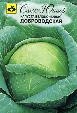 Семена капусты белокочанной длительного хранения сорта Доброводская