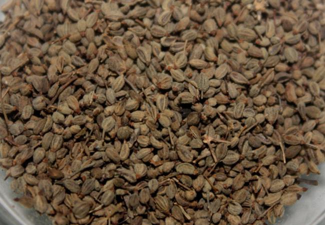 Семена петрушки корневой для посадки на дачном участке
