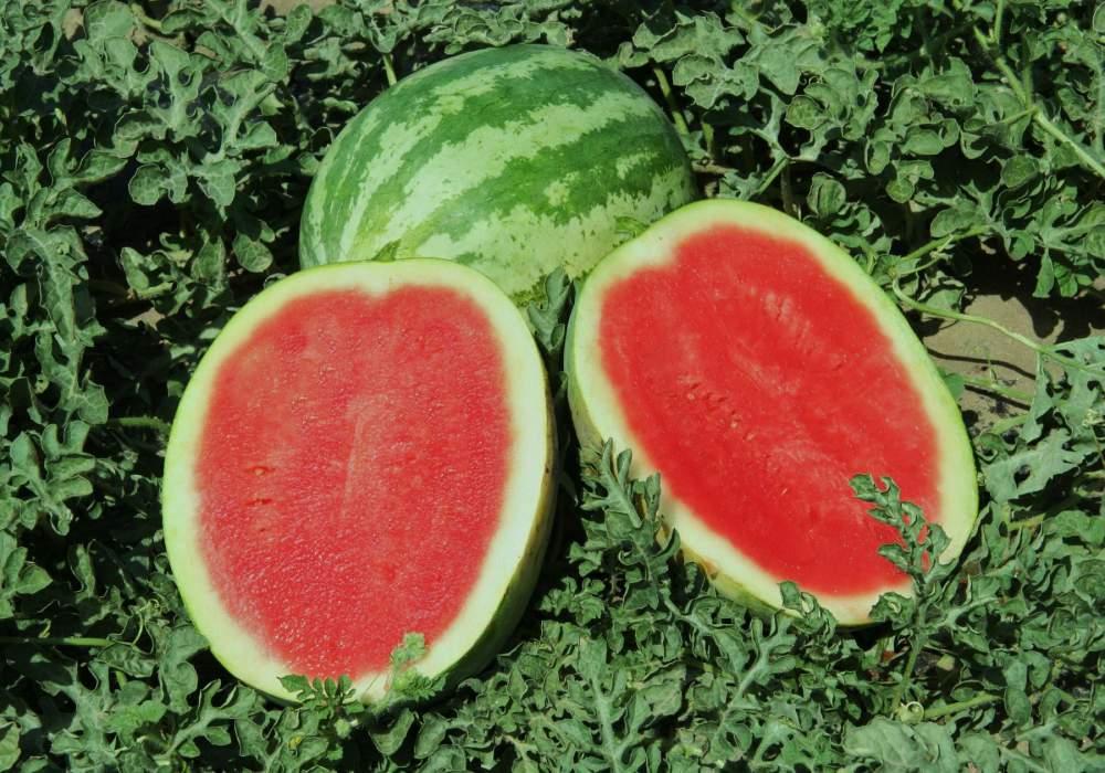 Сочная ароматная ягода арбуз Кримсон Свит