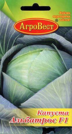 Сорт капусты белокочанной - Альбатрос пригодный для любого климата