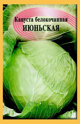 Сорт капусты белокочанной - устойчивая к морозам Июньская