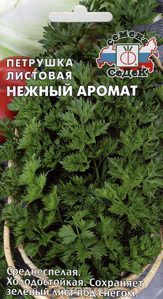 Сорт листовой среднеспелой холодостойкой петрушки Нежный аромат