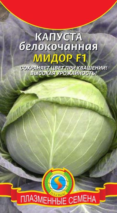Высокоурожайная белокочанная капуста сорта Мидор для закваски и засола