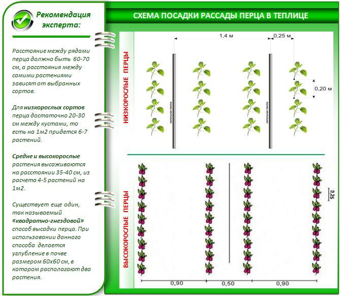 Выращивание перца в теплице из поликарбоната - схема расположения рядов овощной культуры