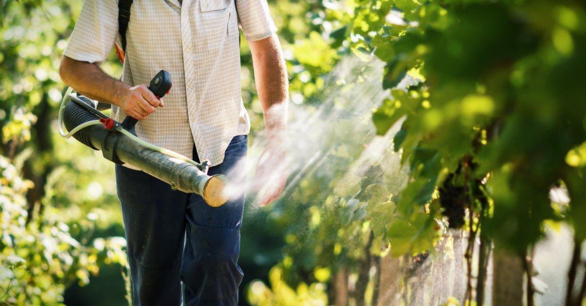 Обработка винограда коллоидной серой - профилактика и лечение