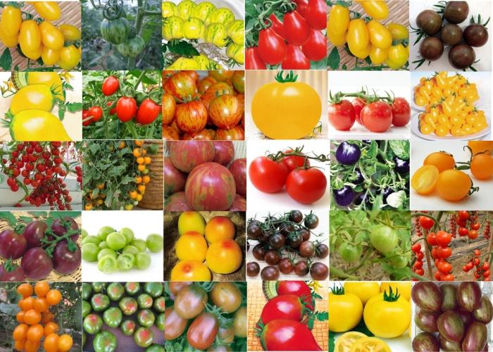 Детерминантный сорт помидор какие бывают разновидности