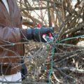 Инструкция по обрезке алычи - удаление ветвей растущих внутрь