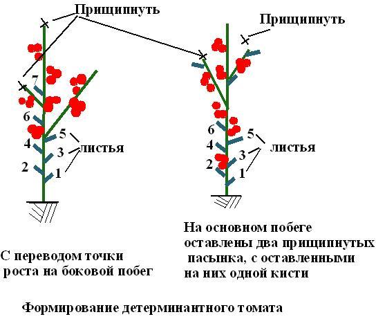 Как правильно придать форму детерминантному томату