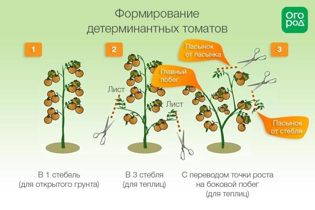 Схема формирования куста детерминантного сорта помидор
