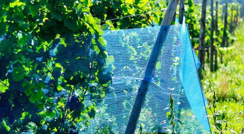 Как выбрать сетку для защиты от птиц и ос
