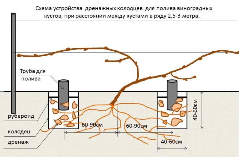 Как получить здоровую корневую систему винограда