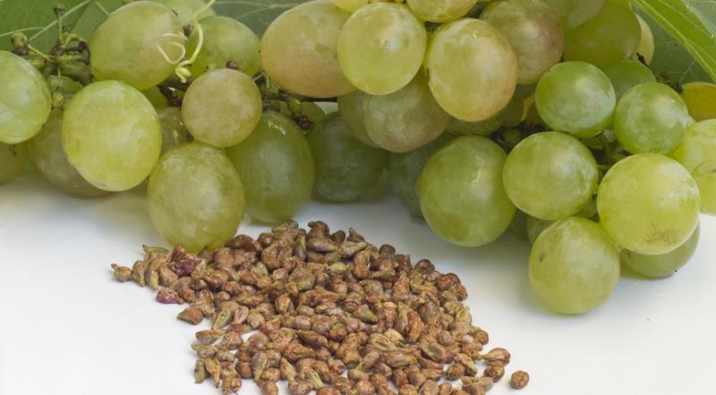 Подготовка виноградных косточек к посадке в грунт