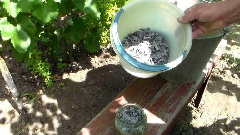 Сухая корневая подкормка винограда золой