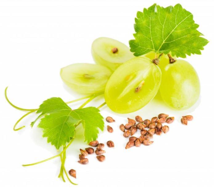 Виноград из косточки - выбор сорта и подготовка семян